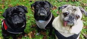 puhkus-lemmikloomaga-majutus-koeraga-spithami