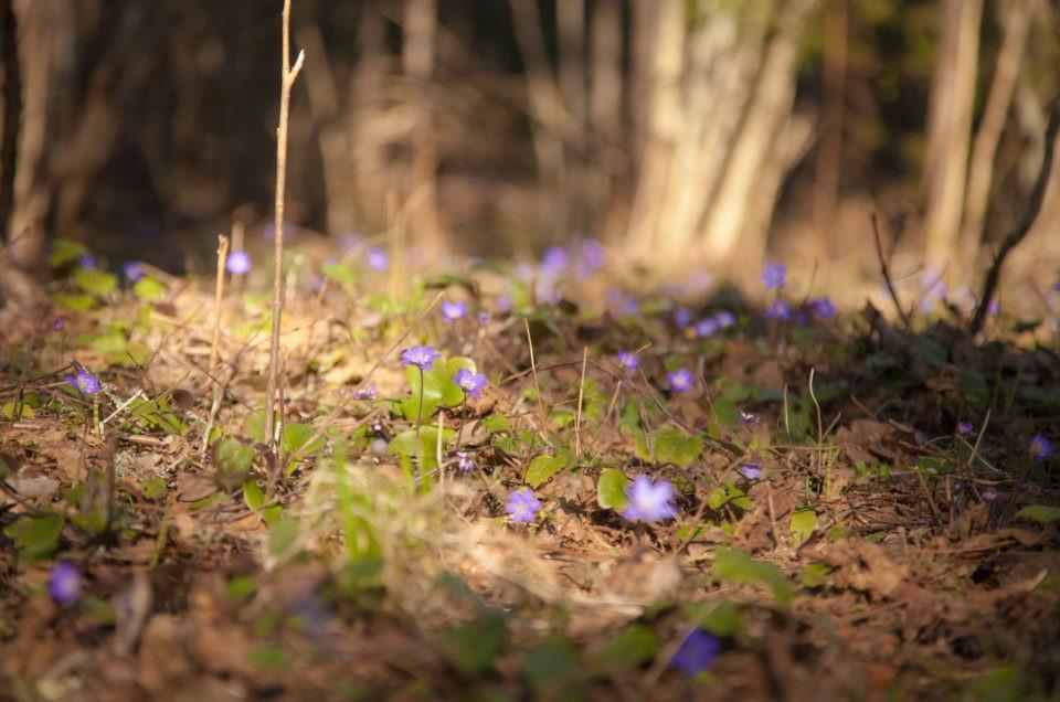 perepuhkus eestis spithami puhkemajad